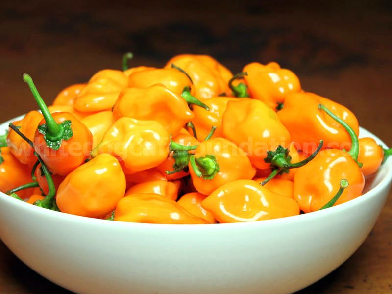 Habanero Peppers