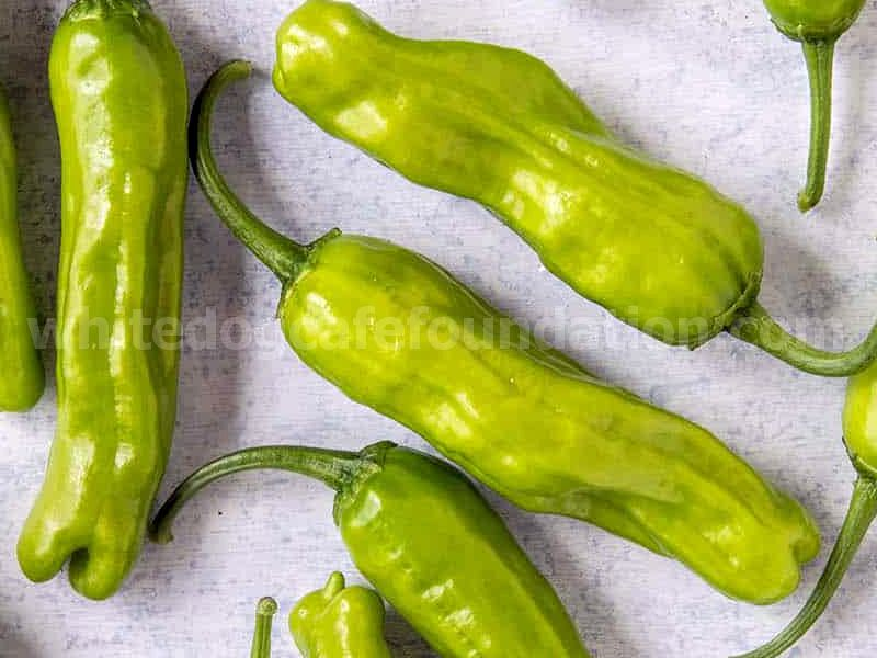 Shishito Peppers: All About Them
